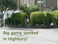 Big game spotted in Highbury